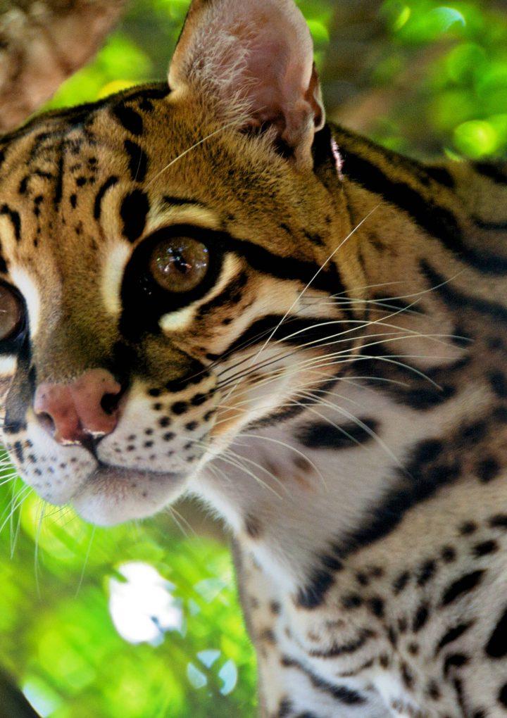 WWF: 60 procent av vilda djur försvann på 44 år